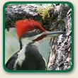 FFL_aboutbirds4.jpg